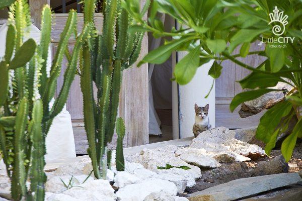 Punta Cana Katze