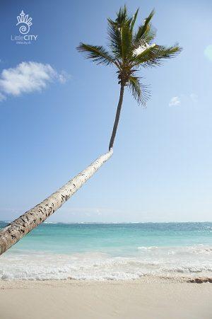Punta Cana 300