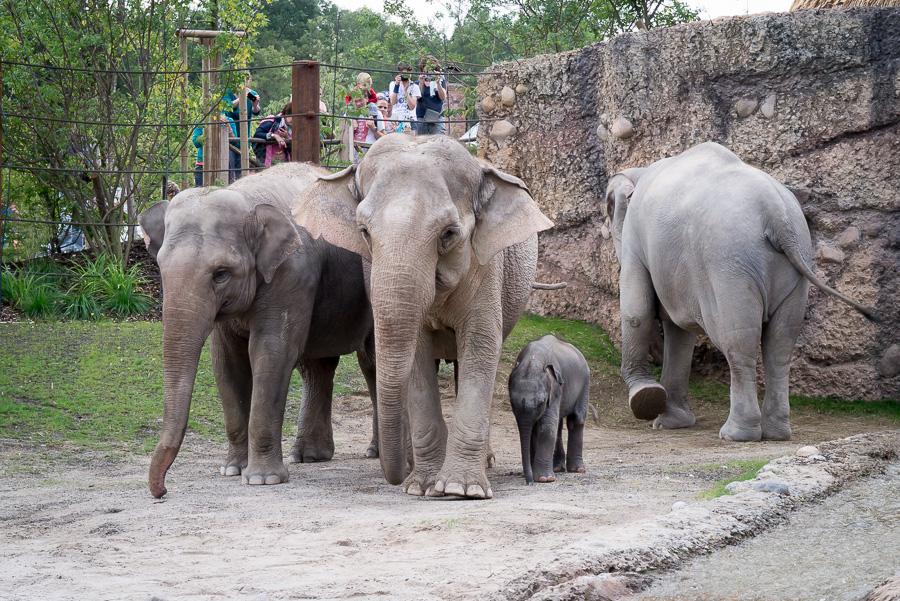 Elefantenpark Zoo Zürich (6 von 9)