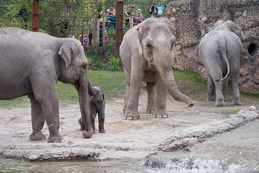 Elefantenpark Zoo Zürich (7 von 9)