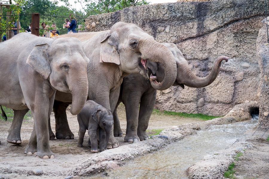 Elefantenpark Zoo Zürich (8 von 9)