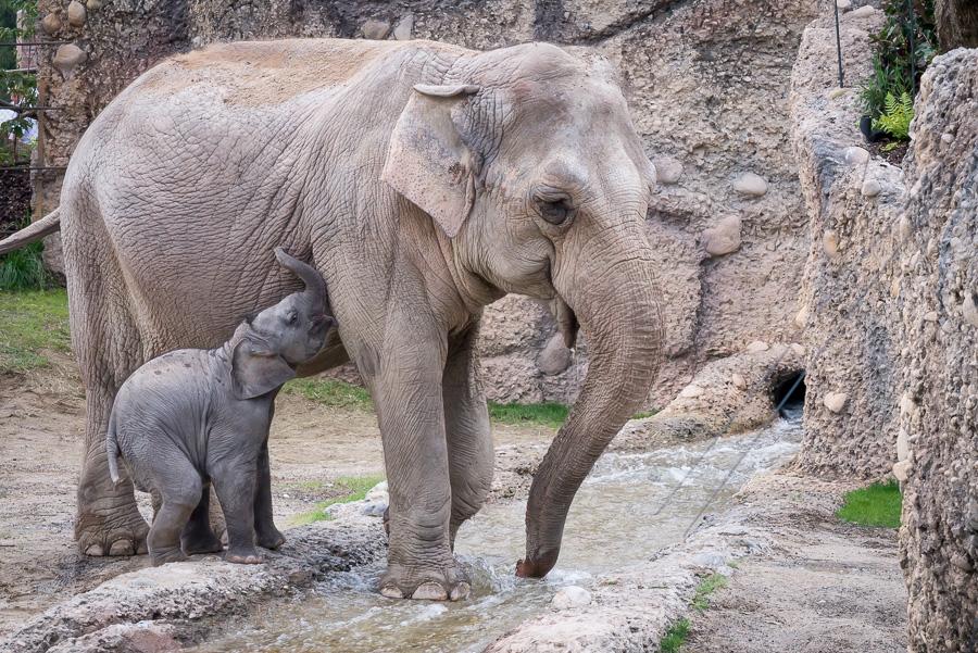 Elefantenpark Zoo Zürich (9 von 9)