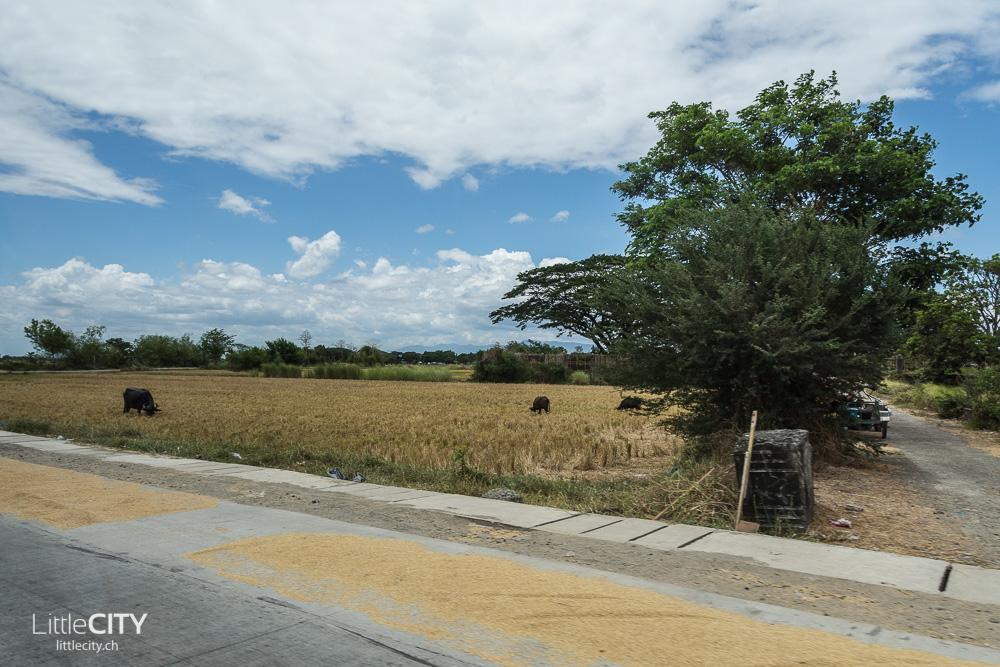 Banaue Reisterassen Ifugao 2015-7
