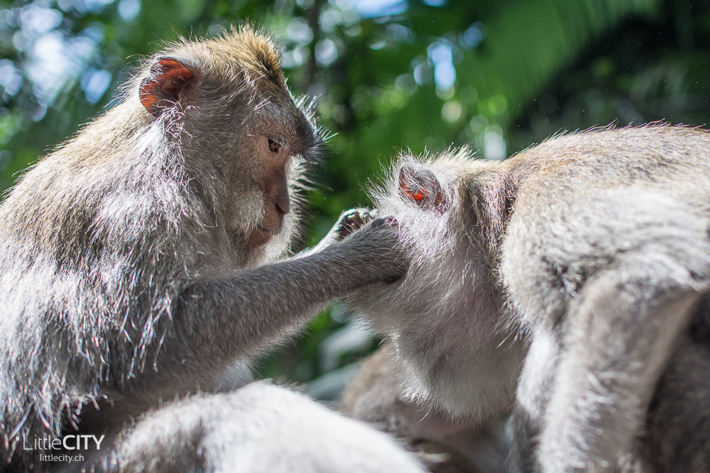 Monkey Forest Ubud 2015_w-13