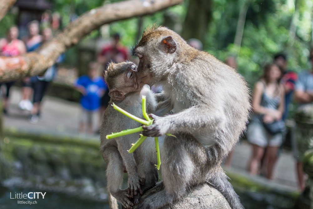 Monkey Forest Ubud 2015_w-16