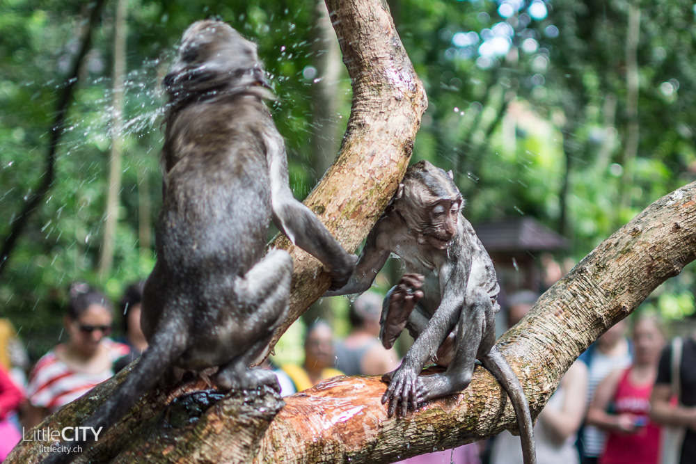 Monkey Forest Ubud 2015_w-17