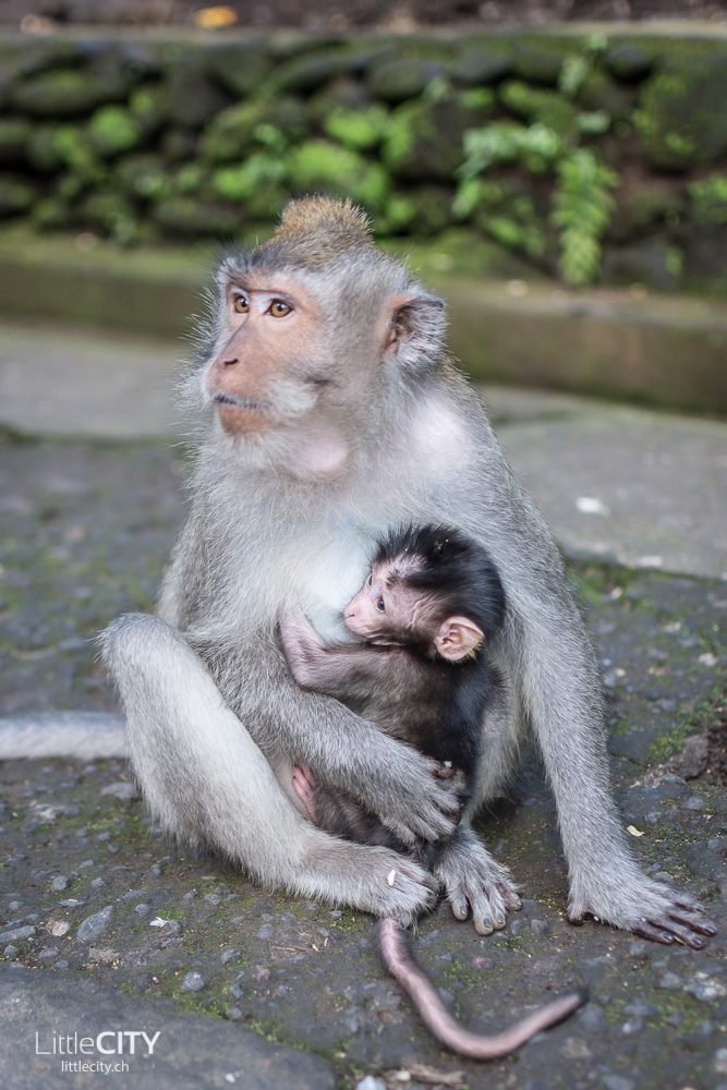 Monkey Forest Ubud 2015_w-18
