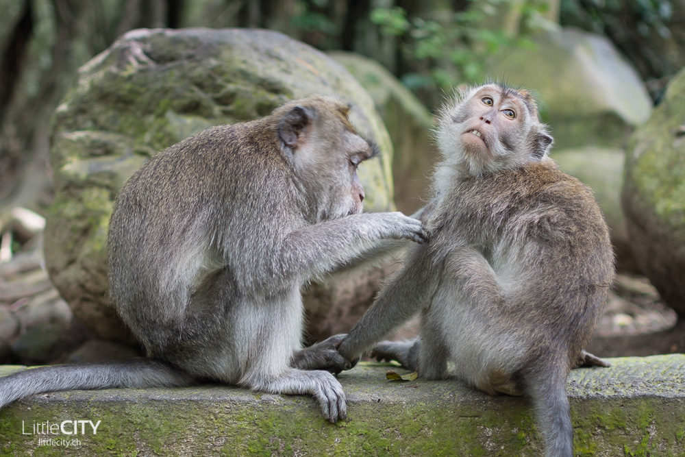 Monkey Forest Ubud 2015_w-4