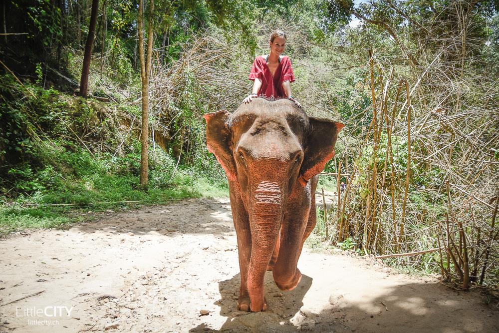 Patara Elephant Farm Chiang Mai 2015-11