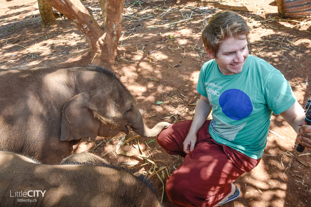 Patara Elephant Farm Chiang Mai 2015-20
