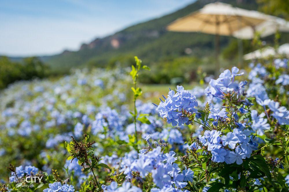 Castell Son Clarent Mallorca Blumen
