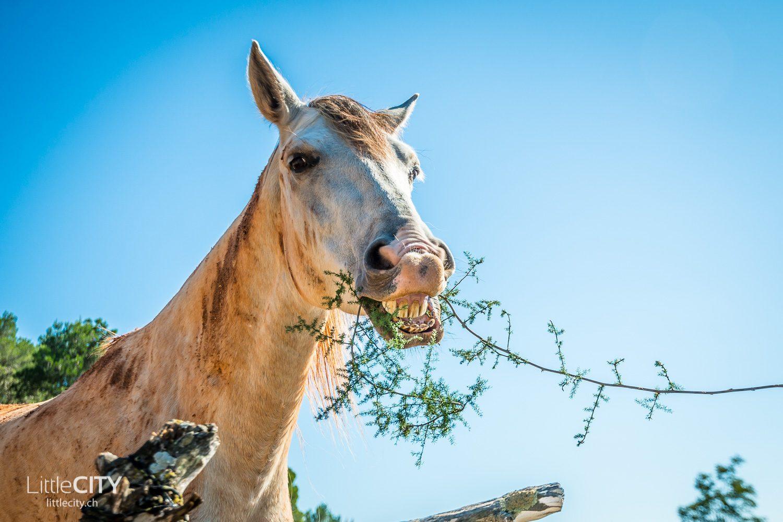Ibiza Roadtrip Funny Horse