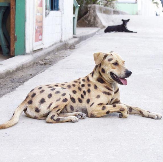 Hund mit Punkten Palawan El Nido