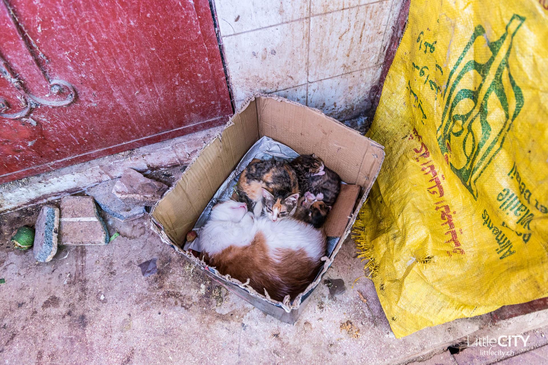 Marrakesch Baby Katzen Markt