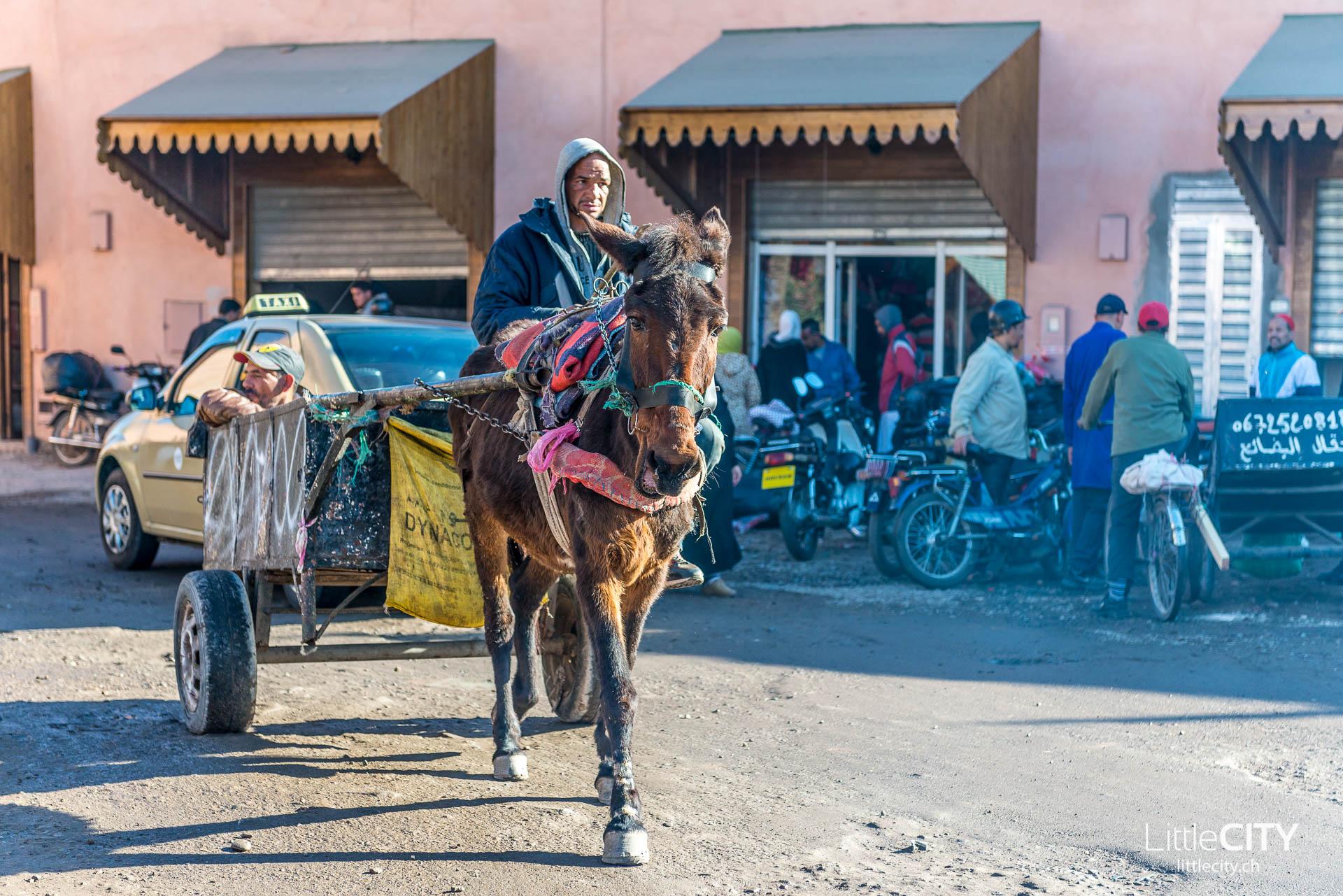 Marrakesch Esel Medina