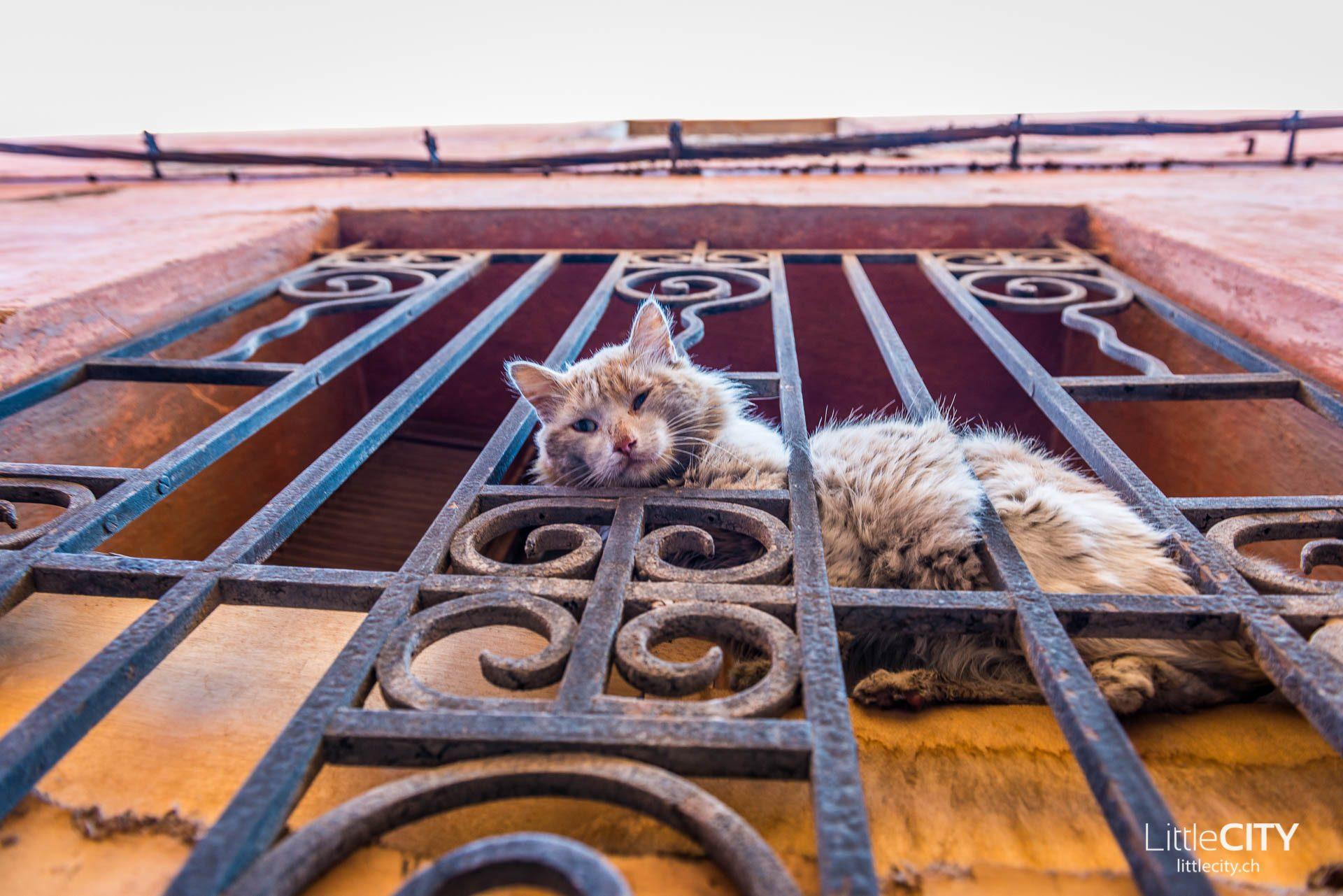 Marrakesch Katze