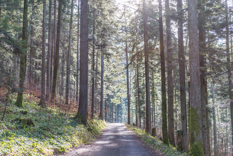 Zug Mini Roadtrip-1
