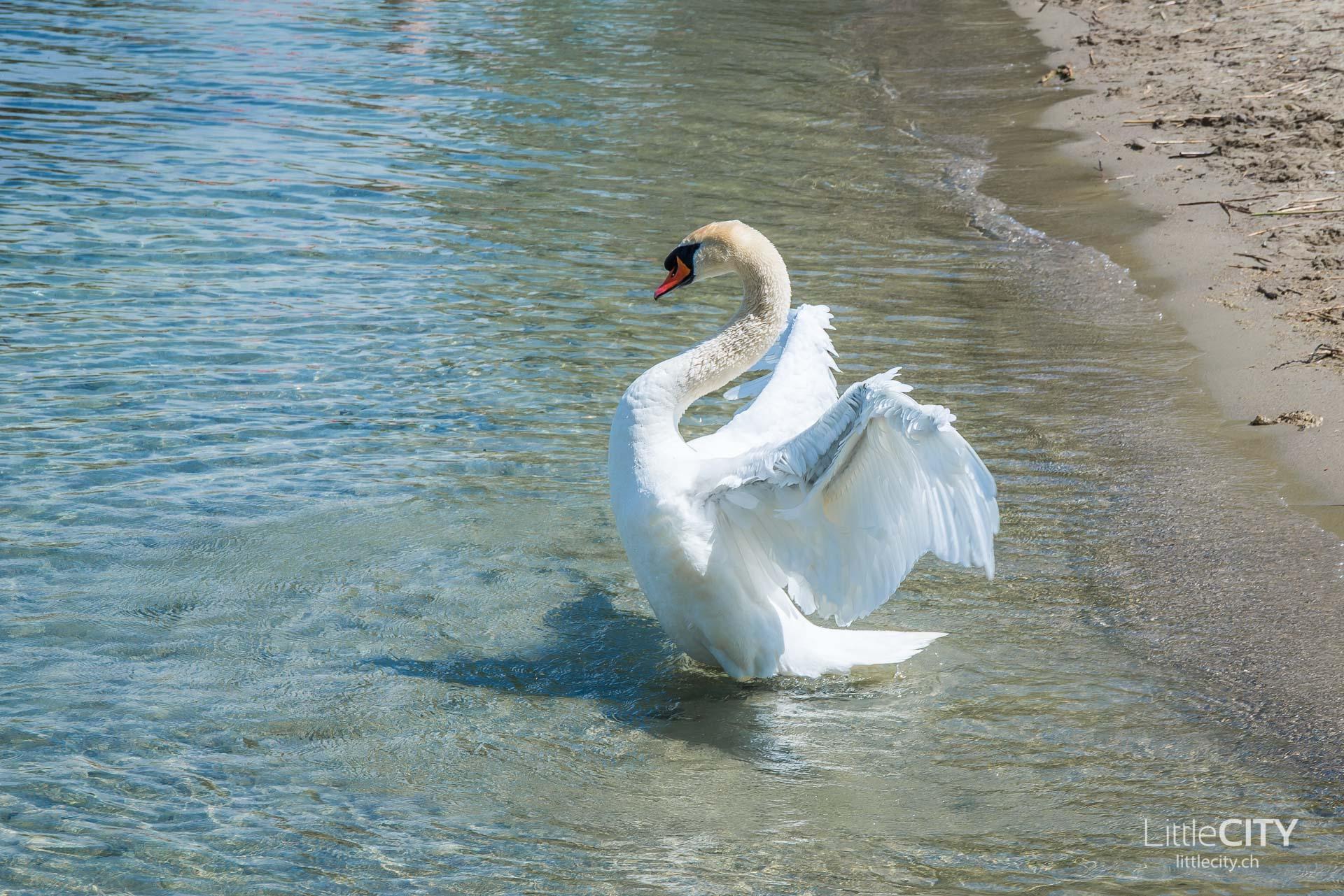 Estavayer le lac Fribourg Reisetipps-24