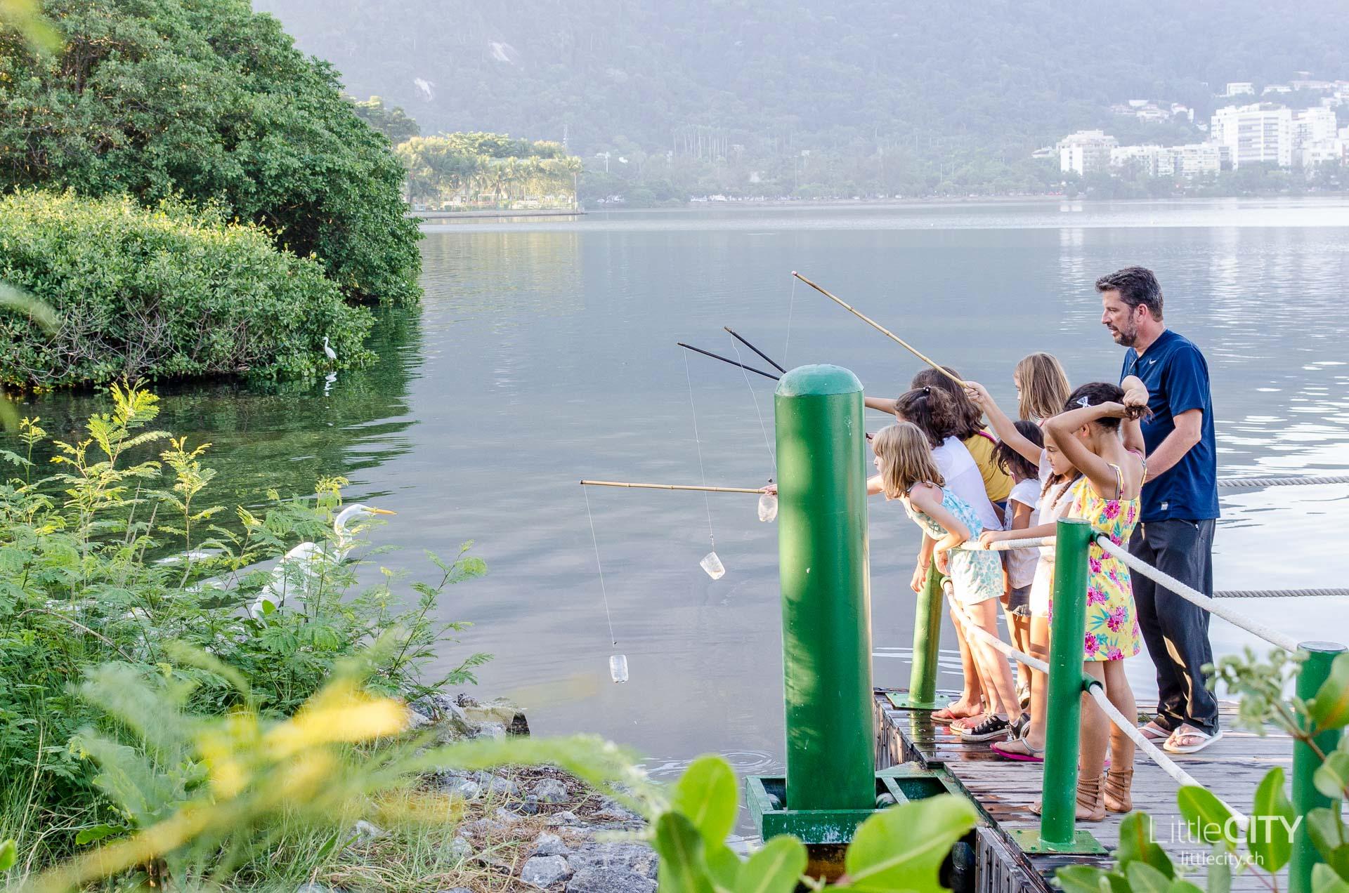 Rodrigo de Freitas Lagoon Fish Rio de Janeiro