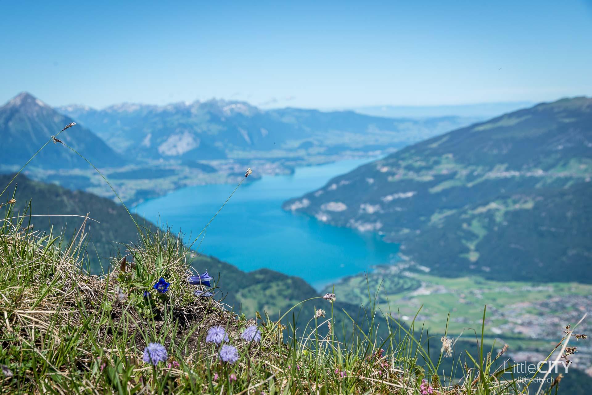 Schynige Platte Wanderung Jungfrau Bahnen LittleCITY-15