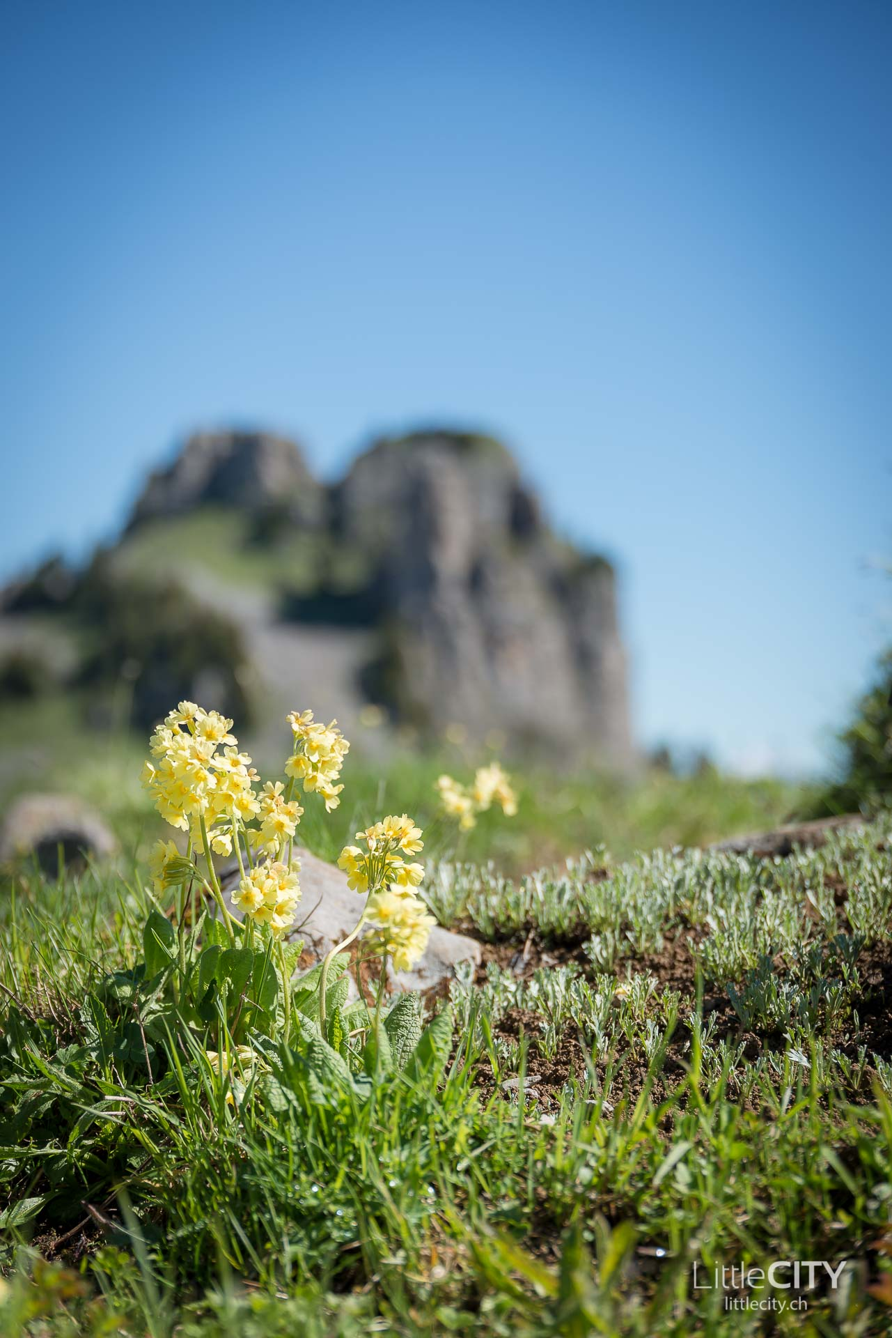 Schynige Platte Wanderung Jungfrau Bahnen LittleCITY-2