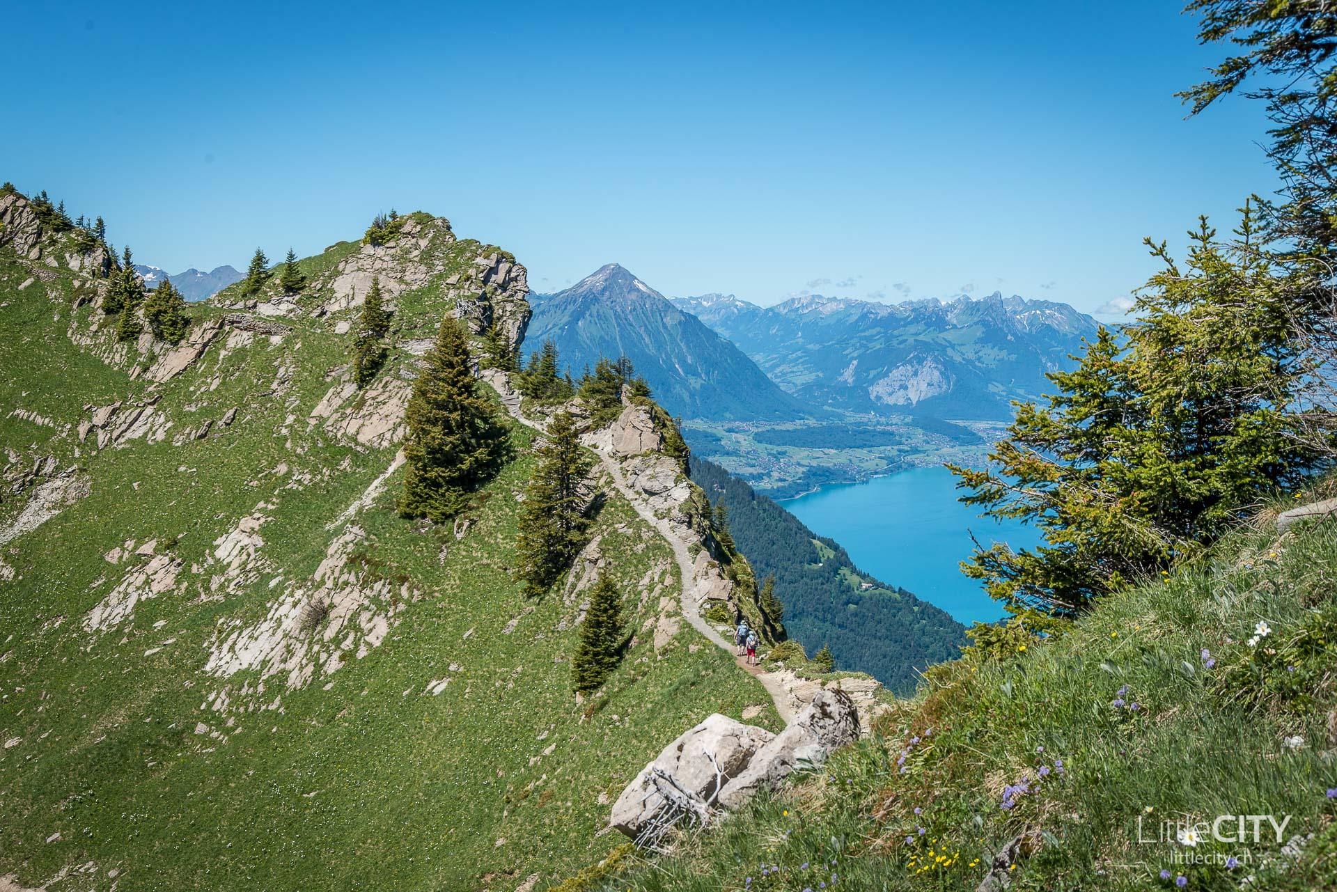 Schynige Platte Wanderung Jungfrau Bahnen LittleCITY-21