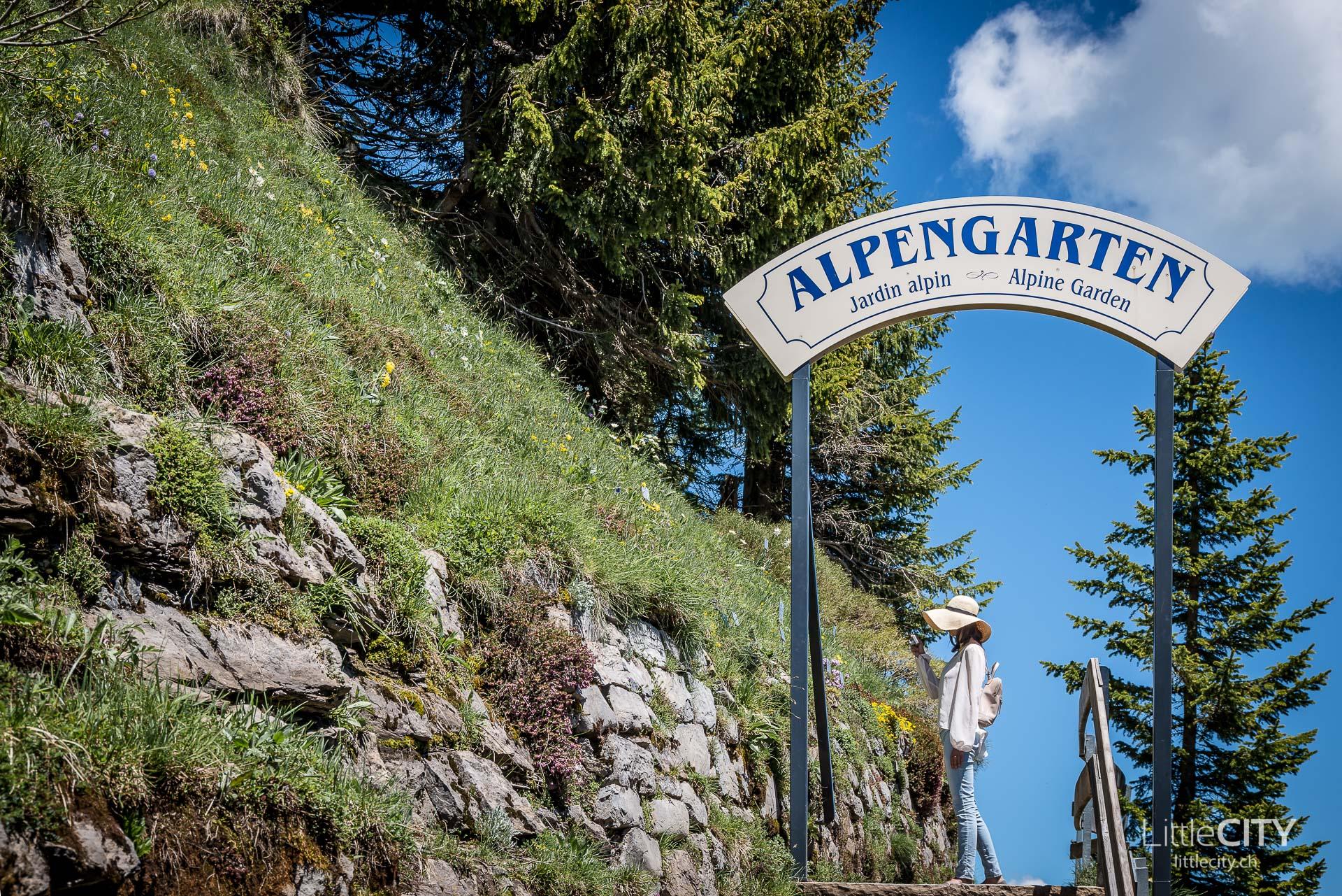 Schynige Platte Wanderung Jungfrau Bahnen LittleCITY-27
