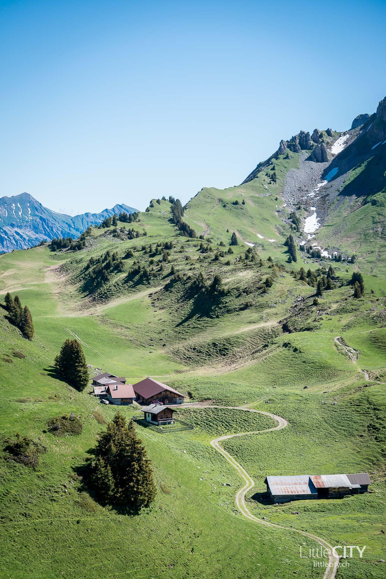 Schynige Platte Wanderung Jungfrau Bahnen LittleCITY-3