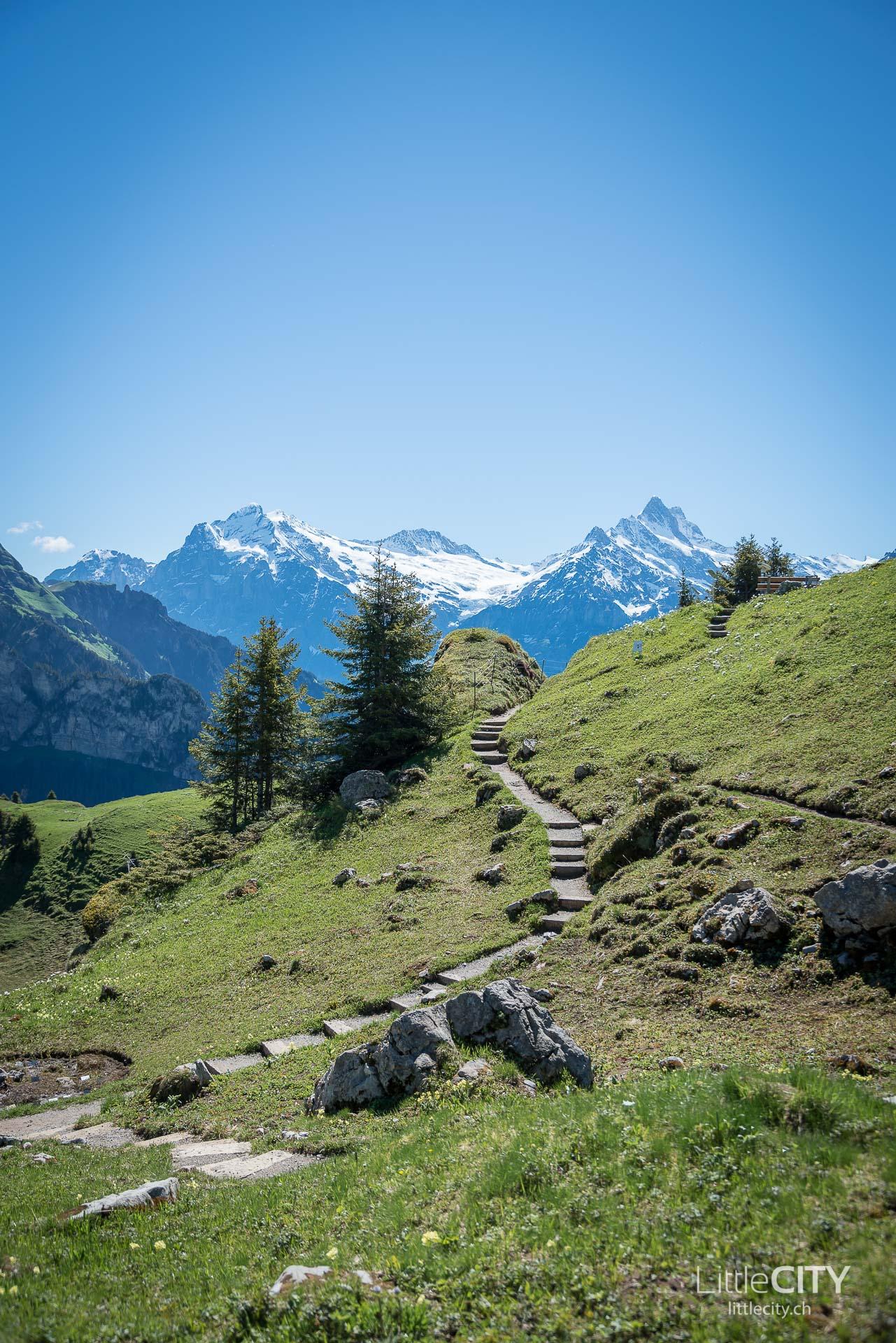 Schynige Platte Wanderung Jungfrau Bahnen LittleCITY-4