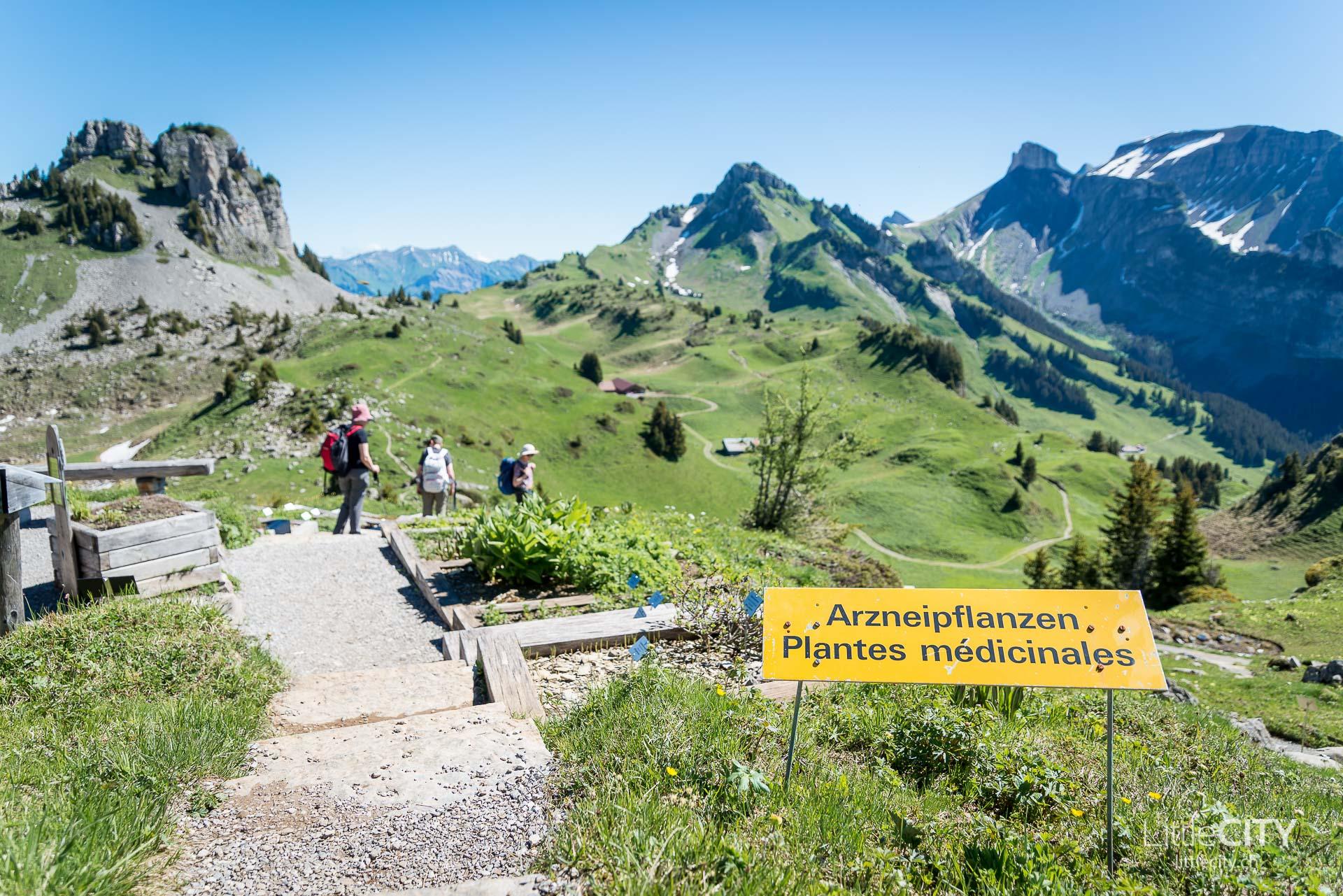 Schynige Platte Wanderung Jungfrau Bahnen LittleCITY-5