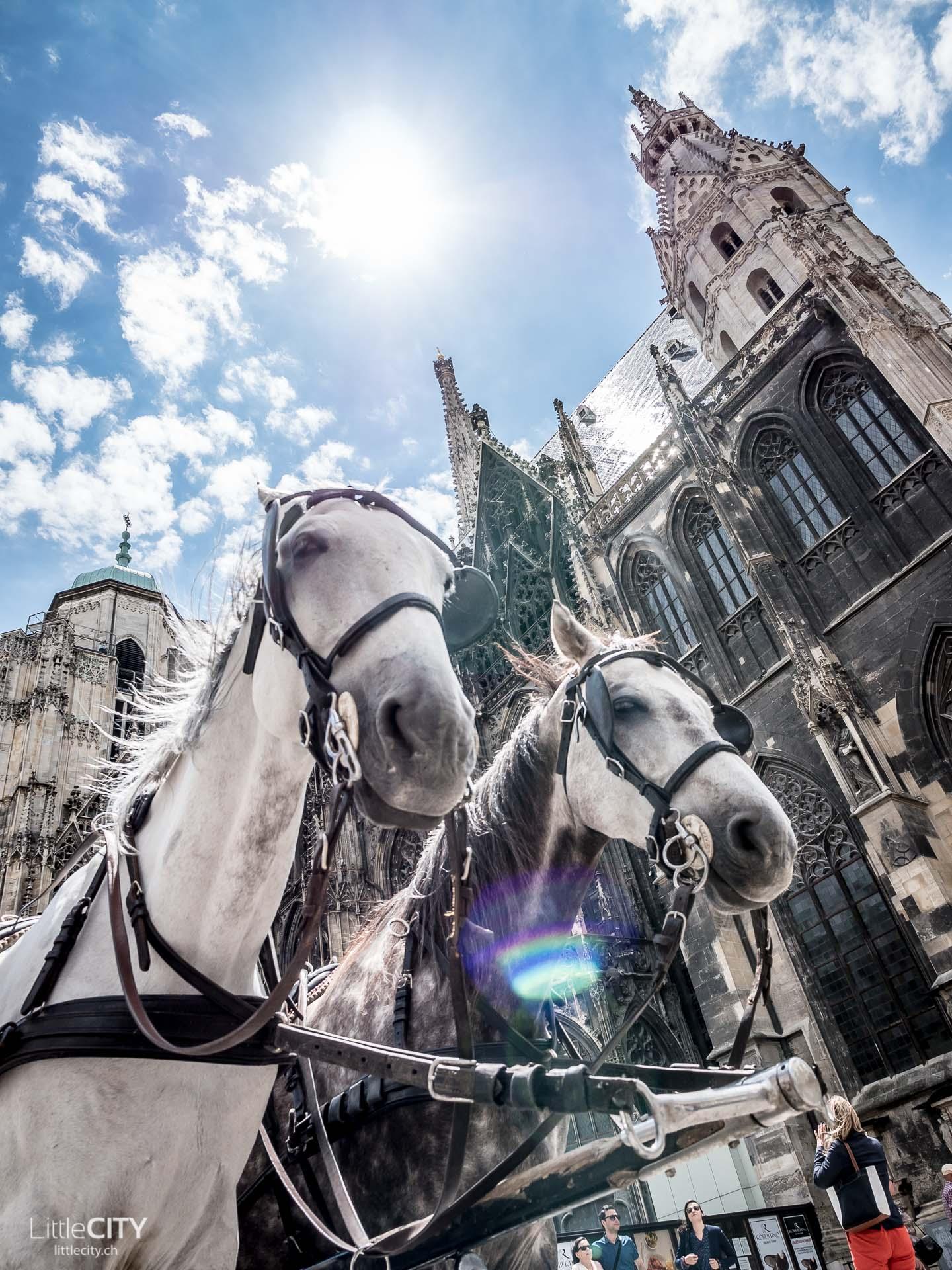 Wien Städtereise Stephansdom