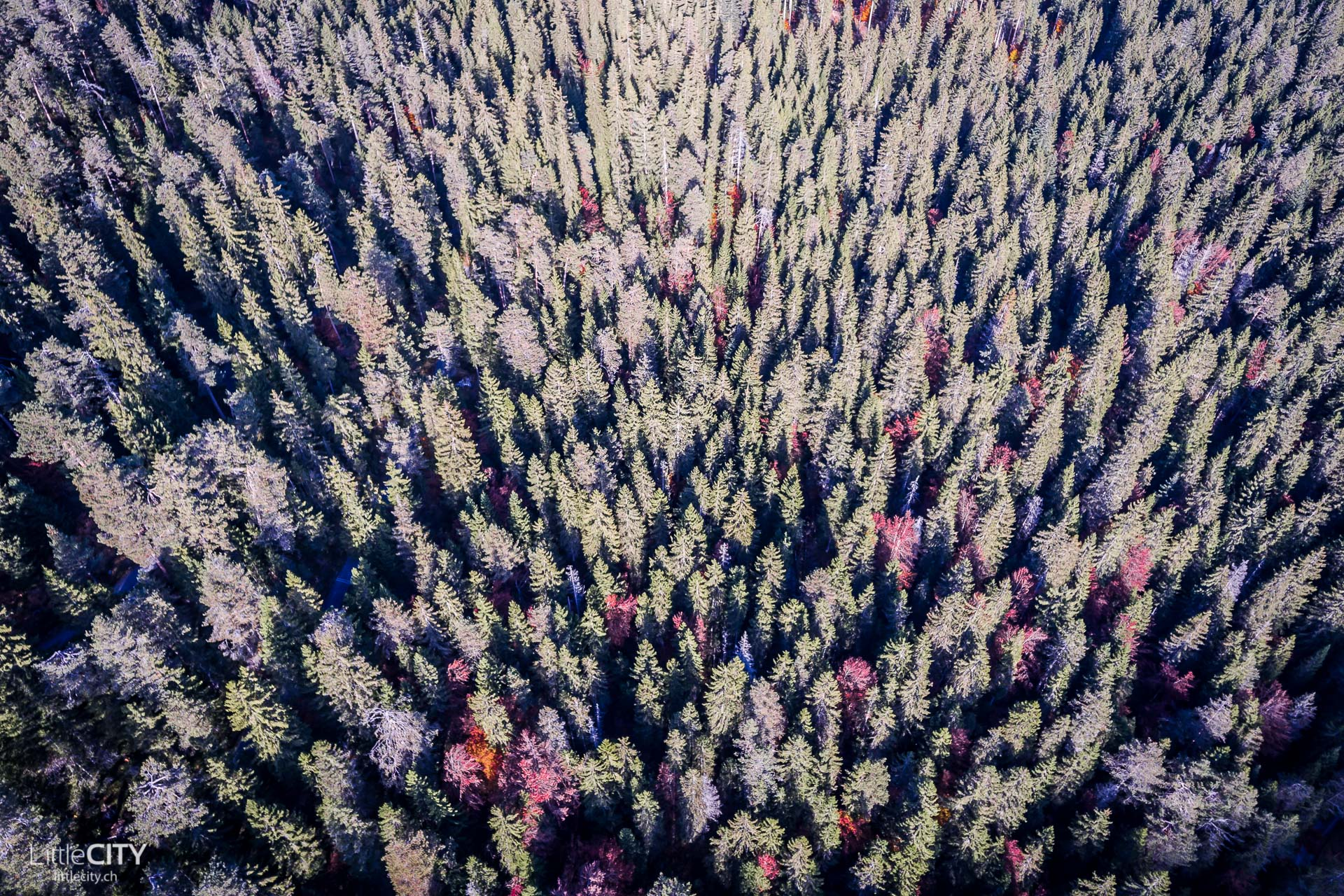 Flims im Herbst Wald
