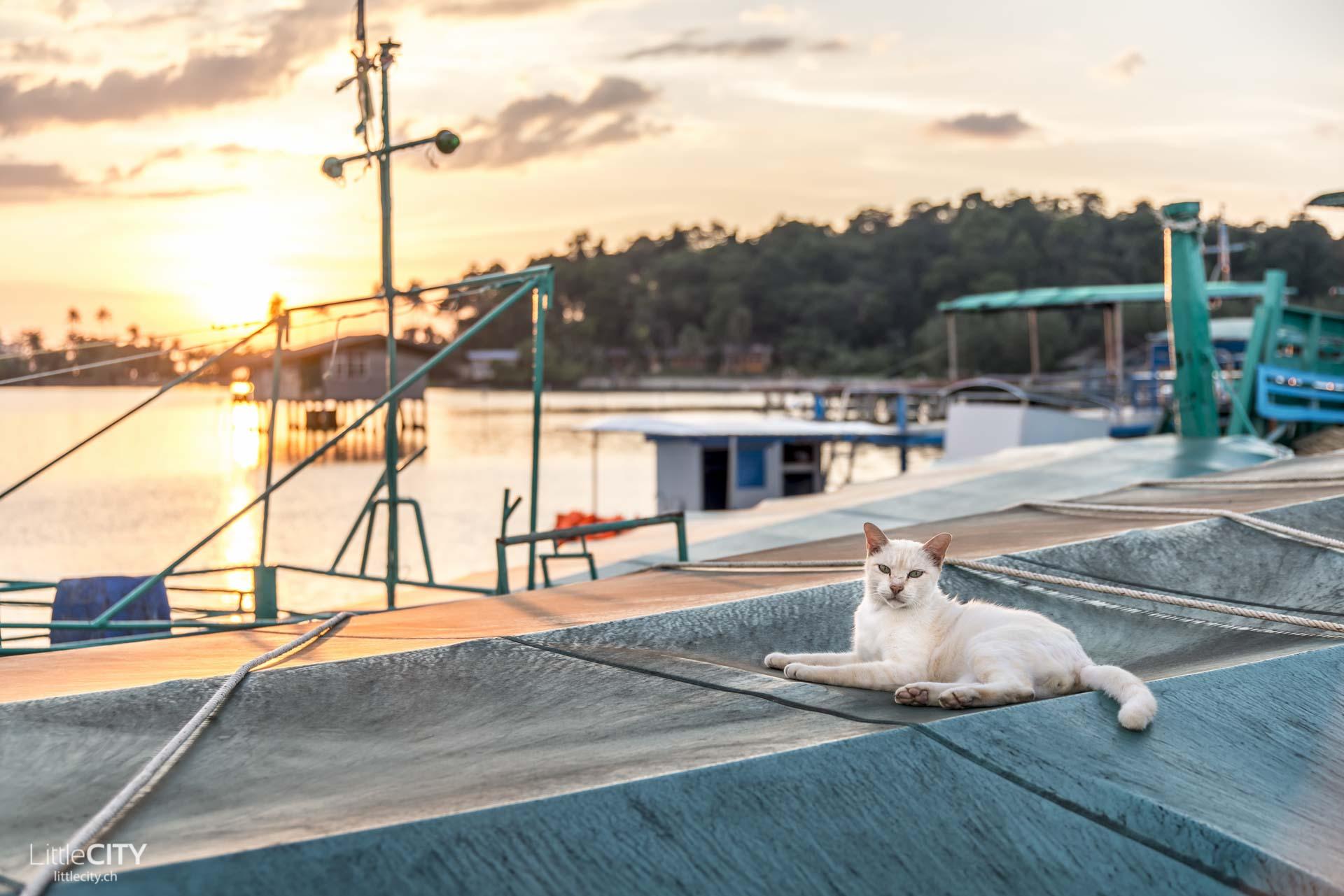 Koh Chang Bang Bao Katze