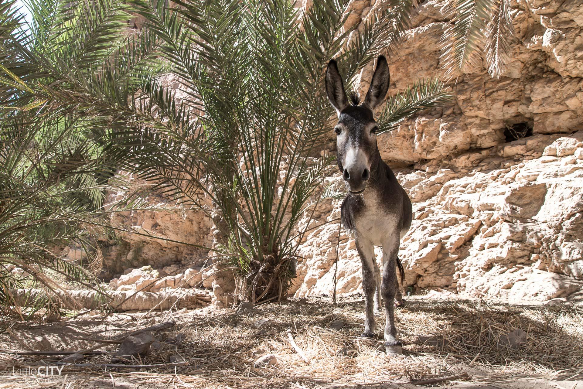 oman-wadi-shab-esel