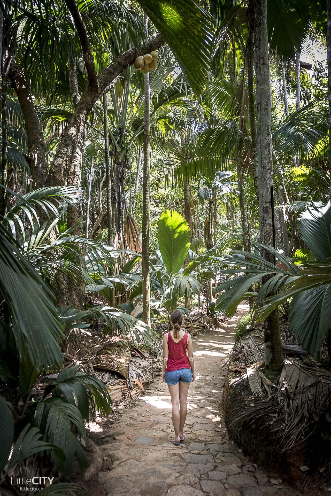 Praslin Valle du Mai Palmenwald, Seychellen Reisetipps