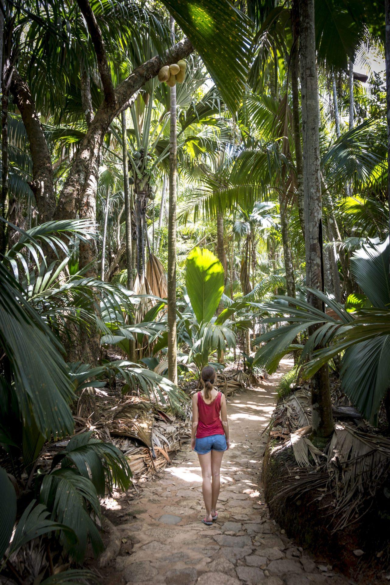 Valle de Mai Praslin Seychellen