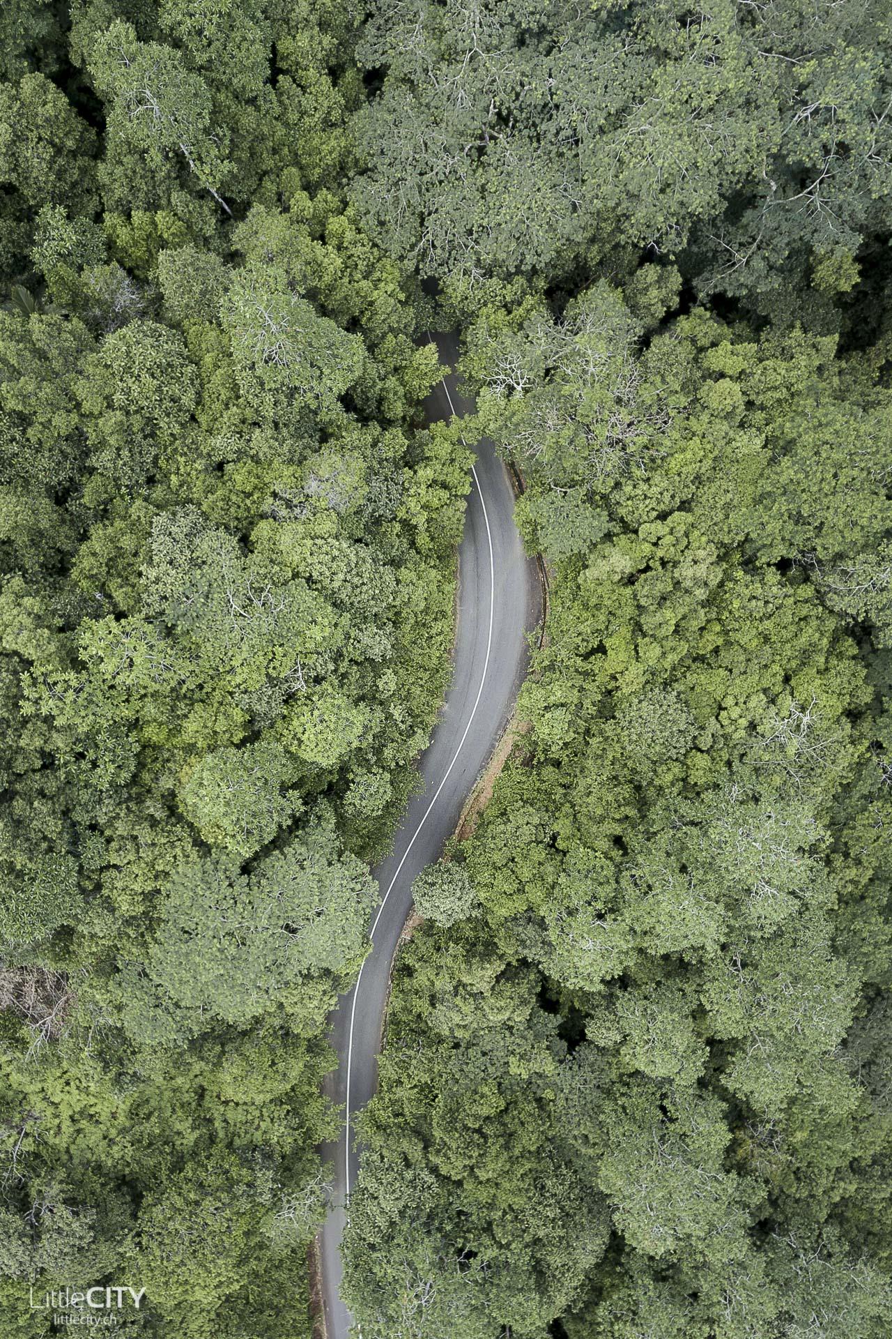 seychellen-mahe-regenwald