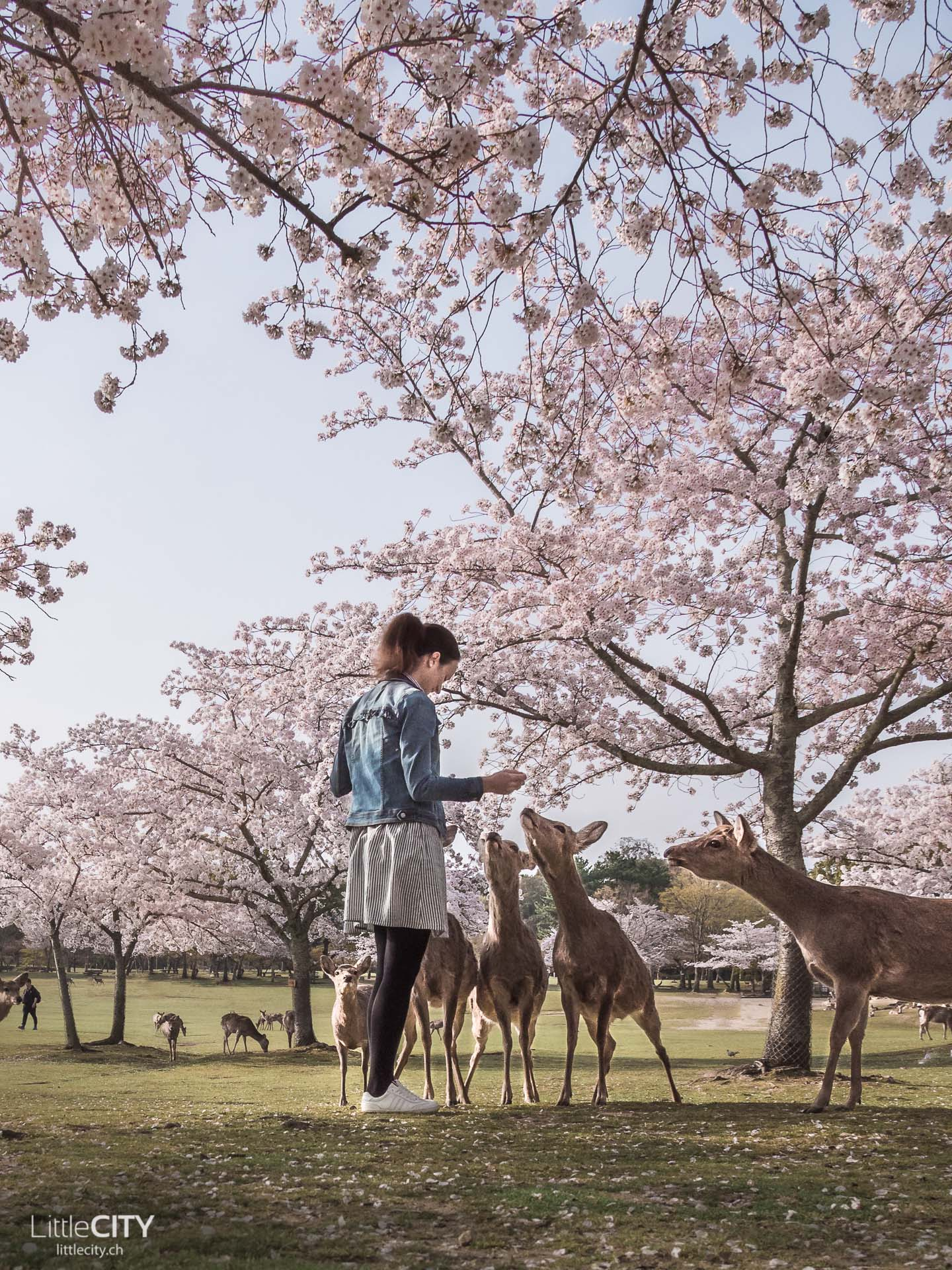 Nara Park Japan Roadtrip