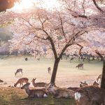 Nara Park Sonnenaufgang