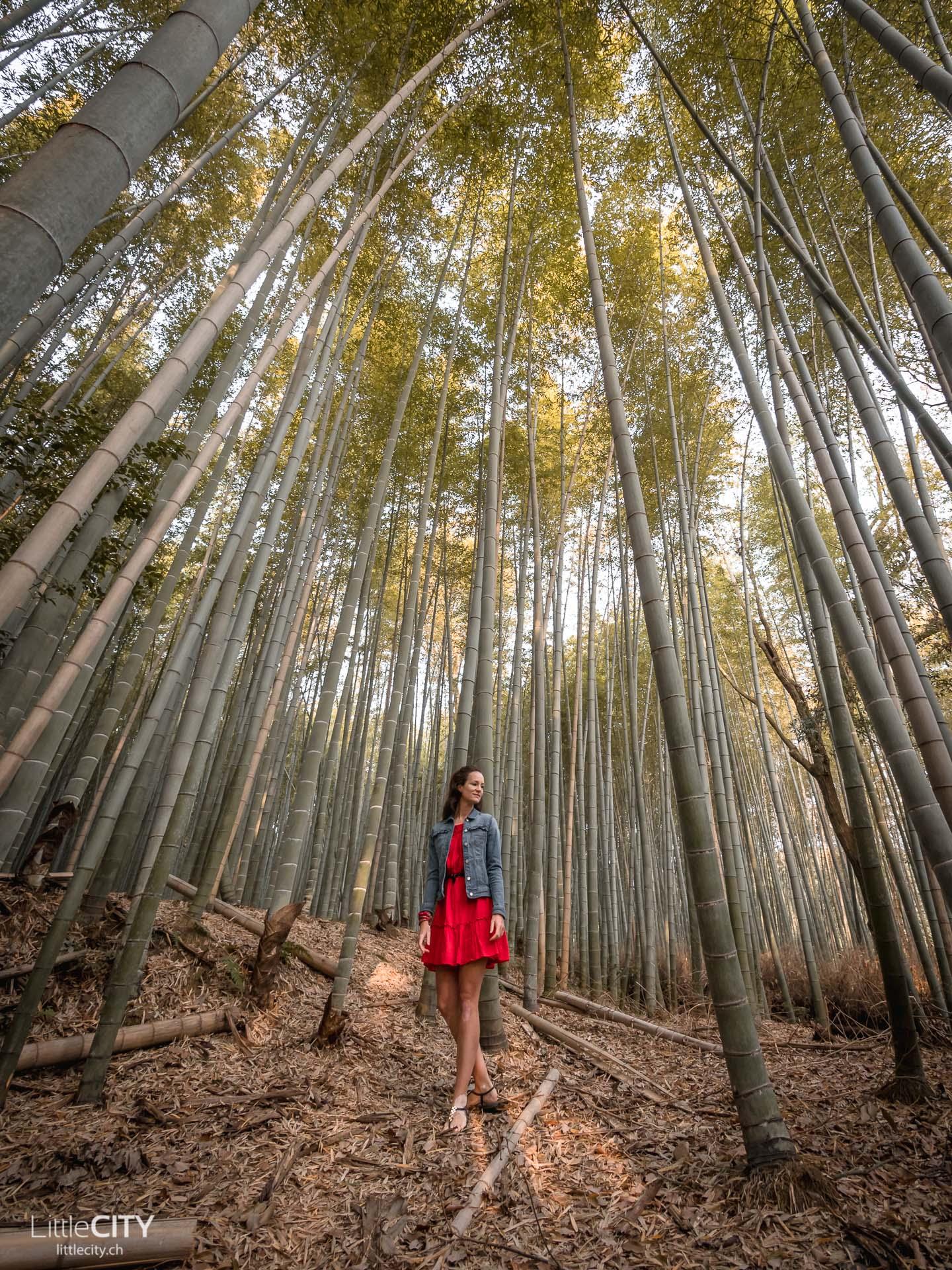 Kyoto Arashijama Bambuswald