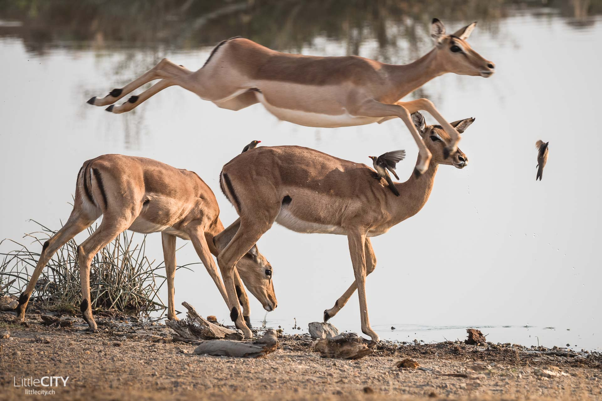 Südafrika Reise Safari Olifant River Park