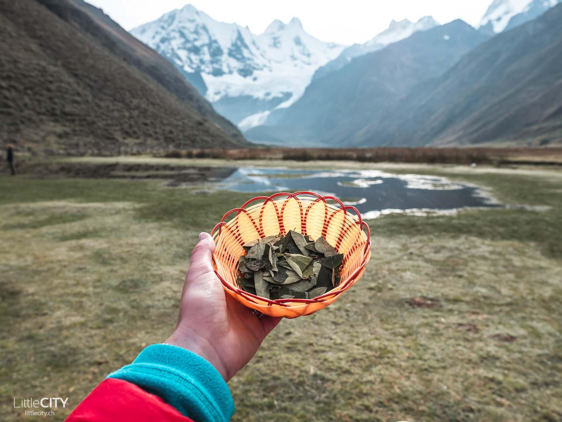 Per Trecking Coca Tee Blätter