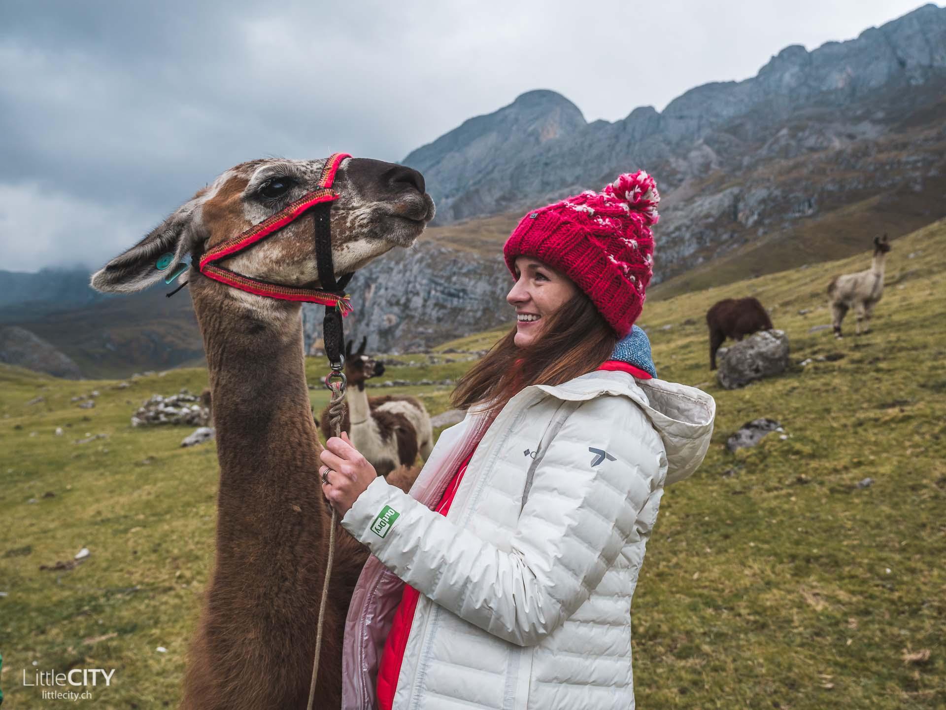 Peru Trecking Cordillera Blanca Lama