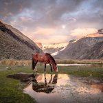 Peru Cordillera Blanca Pferd im Camp