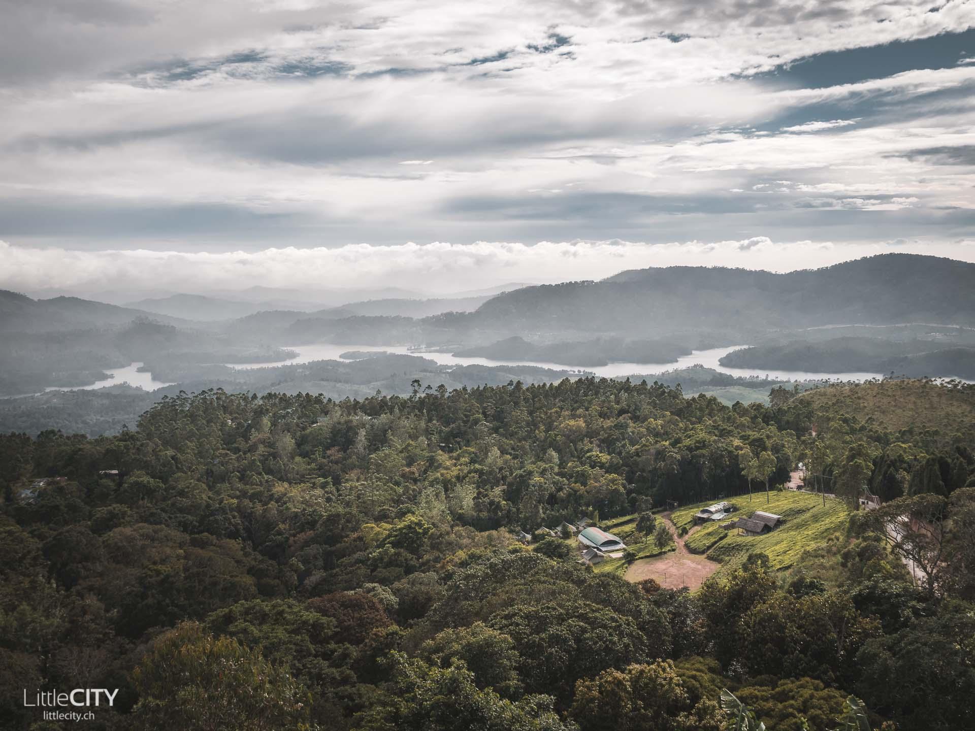 Munnar Kerala Teeplantagen