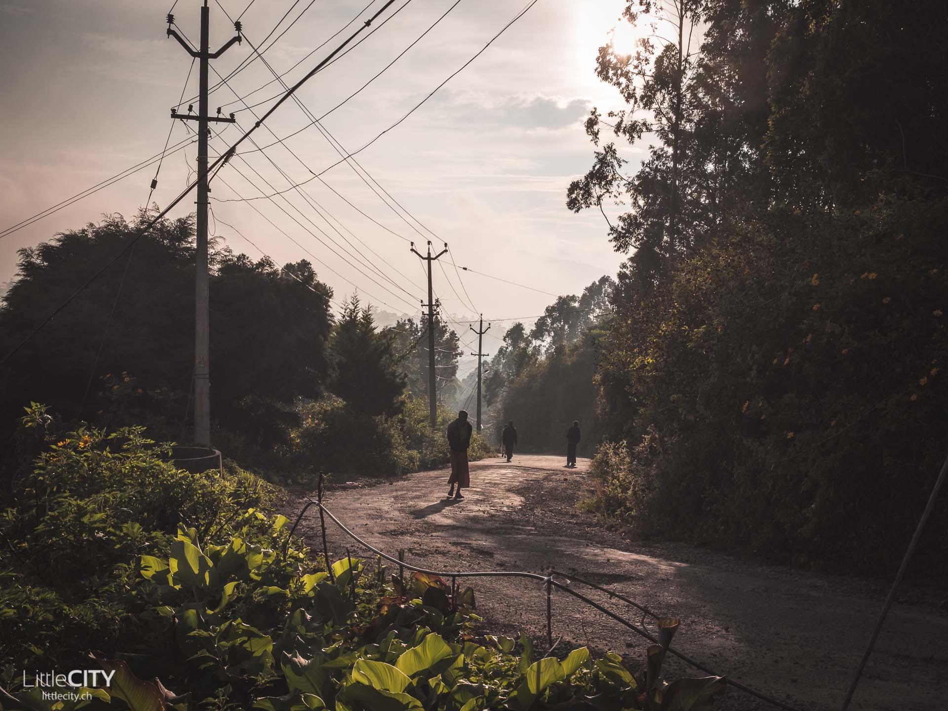 Munnar Kerala Indien